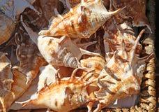 Samling av härliga havsskal Royaltyfri Bild