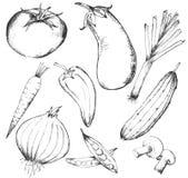 Samling av hand-drog grönsaker royaltyfri fotografi