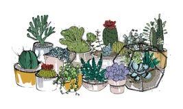 Samling av hand drog suckulenter, kakturs och andra ökenväxter som växer i krukor och glass vivarier home naturligt vektor illustrationer