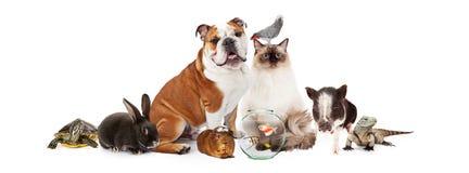 Samling av hemhjälphusdjur tillsammans royaltyfria bilder