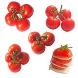 Samling av isolerade tomater Fotografering för Bildbyråer