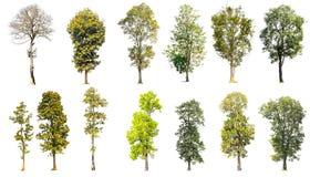 Samling av isolerade träd Royaltyfri Fotografi