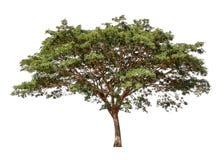 Samling av isolerade träd på en vit bakgrund Det härliga trädet är det passande för bruk, i att dekorera, att dekorera och att sk royaltyfria foton