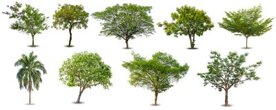 Samling av isolerade träd på vit bakgrund, uppsättning av gröna träd som isoleras på vit bakgrund Royaltyfri Fotografi