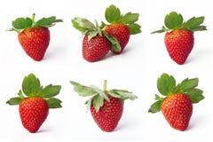 Samling av jordgubbar Arkivfoton