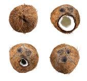 Samling av kokosnötuppsättningen som isoleras på vit Fotografering för Bildbyråer