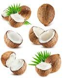 Samling av kokosnötter som isoleras på den vita bakgrunden Fotografering för Bildbyråer
