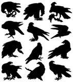 Samling av konturer av fåglar av rovet Arkivfoto