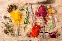 Samling av kryddor Fotografering för Bildbyråer