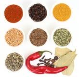 Samling av kryddor i vita krukar arkivfoton