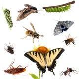 Samling av kryp. Fjärilar, larver, malar, bin, myror Etc. Arkivfoton