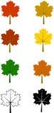 Samling av lönnlöv av olika färger vektor illustrationer
