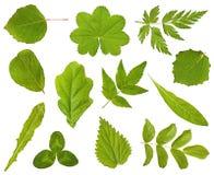 Samling av leaves av olika växter Royaltyfri Bild