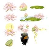 Samling av Lotus Arkivfoton