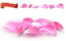 Samling av närbild för rosa färgroskronblad på vit bakgrund Detalj för vektor för rosa färgroskronblad hög stock illustrationer