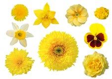 Samling av nio gula blommor Royaltyfri Fotografi