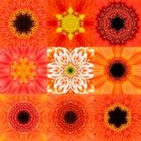 Samling av nio orange koncentrisk blomma Mandala Kaleidoscope Fotografering för Bildbyråer