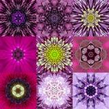 Samling av nio purpurfärgad koncentrisk blomma Mandala Kaleidoscope Arkivfoton