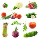 Samling av nya grönsaker Royaltyfria Bilder