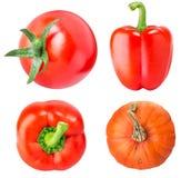 Samling av nya grönsaker på vit bakgrund arkivbild