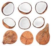 Samling av nya kokosnötter på vit Fotografering för Bildbyråer