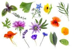 Samling av nya medicinska örter och blommor som isoleras på vit bakgrund Royaltyfria Bilder