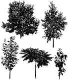 Samling av olik art av träd: körsbär päron, plommon, björk, sumac Arkivfoton