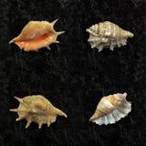 Samling av olika havsskal Royaltyfri Bild