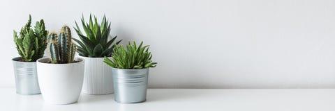 Samling av olika kaktus- och suckulentväxter i olika krukor Inlagda kaktushusväxter på den vita hyllan fotografering för bildbyråer