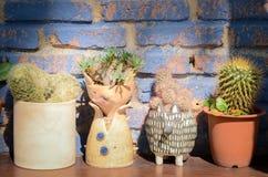 Samling av olika kaktus- och suckulentv?xter i olika krukor Den lantliga inre hem- dekoren royaltyfria foton