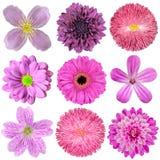 Samling av olika rosa, purpura röda blommor Arkivbilder