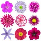 Samling av olika rosa, purpura röda blommor Arkivbild