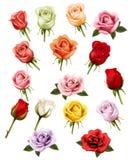 Samling av olika rosor stock illustrationer