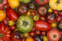 Samling av olika tomater Arkivfoton