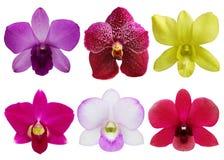 Samling av orchiden. Royaltyfria Foton