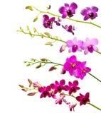 Samling av orchiden. Arkivfoto