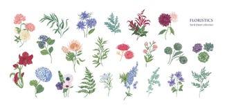 Samling av populära floristic blommor och dekorativa växter som isoleras på vit bakgrund Uppsättning av härligt blom- stock illustrationer