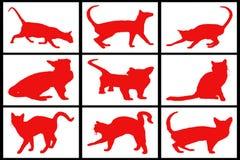 Samling av röda katter Royaltyfri Fotografi