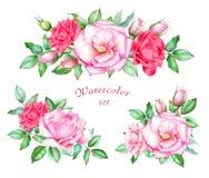 Samling av röda och rosa rosor med knoppar och gräsplansidor Arkivbilder