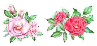 Samling av röda och rosa rosor med knoppar och gräsplansidor Fotografering för Bildbyråer