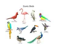 Samling av realistiska tropiska fåglar Exotiskt djurliv royaltyfri illustrationer