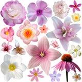 Samling av rosa sommarblommor Arkivfoto