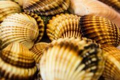 Samling av seahells Fotografering för Bildbyråer