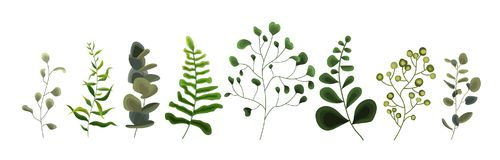 Samling av sidor för eukalyptus för örter för skog för grönskabladväxt tropiska Arkivbilder