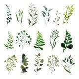 Samling av sidor för eukalyptus för örter för skog för grönskabladväxt tropiska Arkivfoton