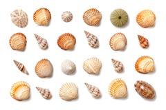 Samling av små exotiska skal som isoleras på en vit bakgrund Arkivbild