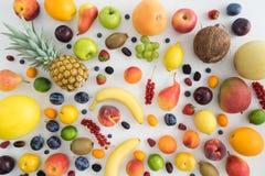 Samling av sommarfrukter Royaltyfri Fotografi