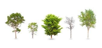 Samling av träd som isoleras på vit Royaltyfri Bild