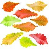 Samling av treeleaves Royaltyfria Bilder
