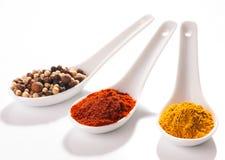 Samling av varma kryddor i små skedar Royaltyfri Fotografi